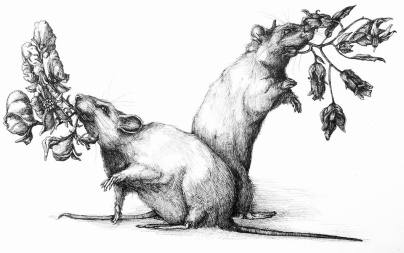 The Poison Mice - Mice with Wolfsbane and Belladonna